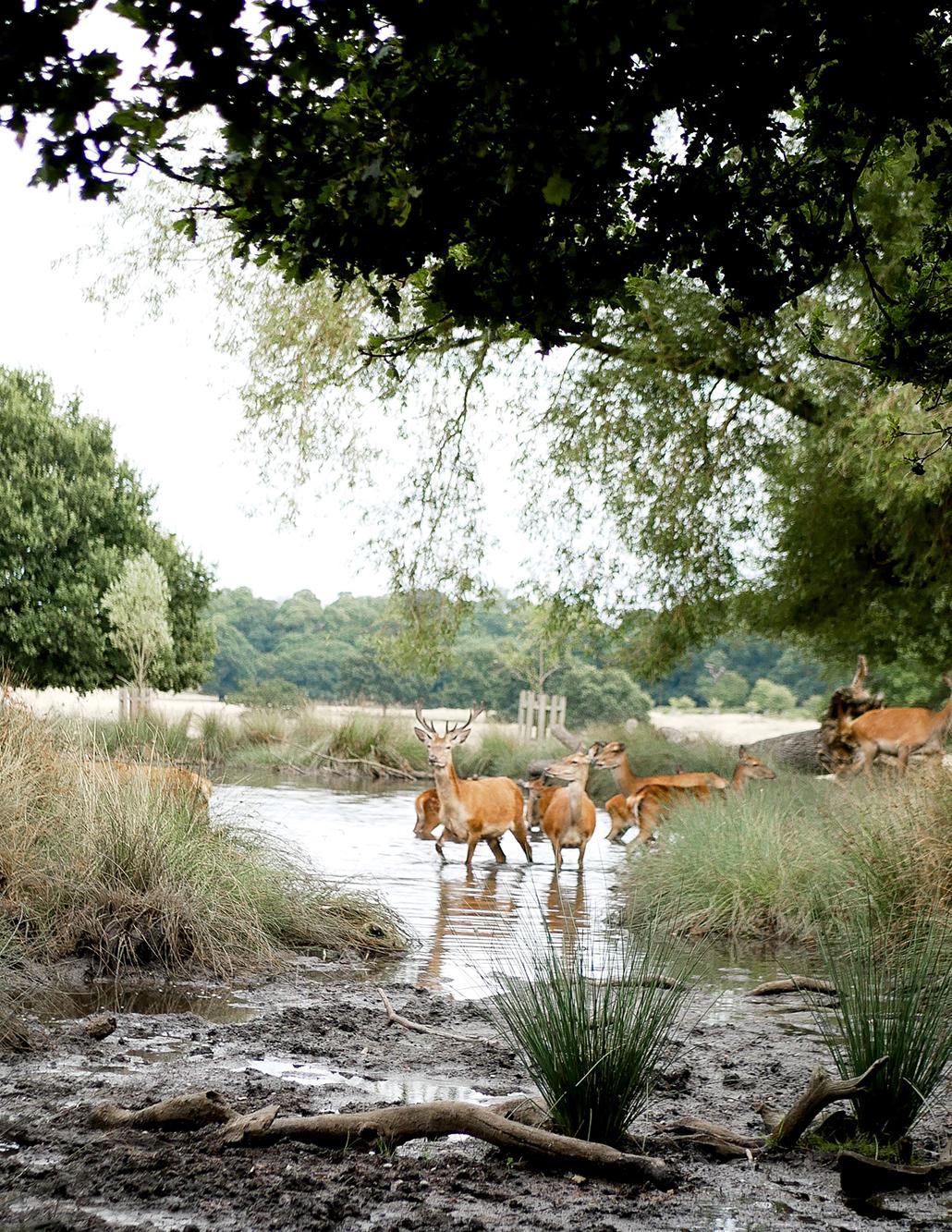 Londres London voyage trip expat conseil astuce nature richmond park