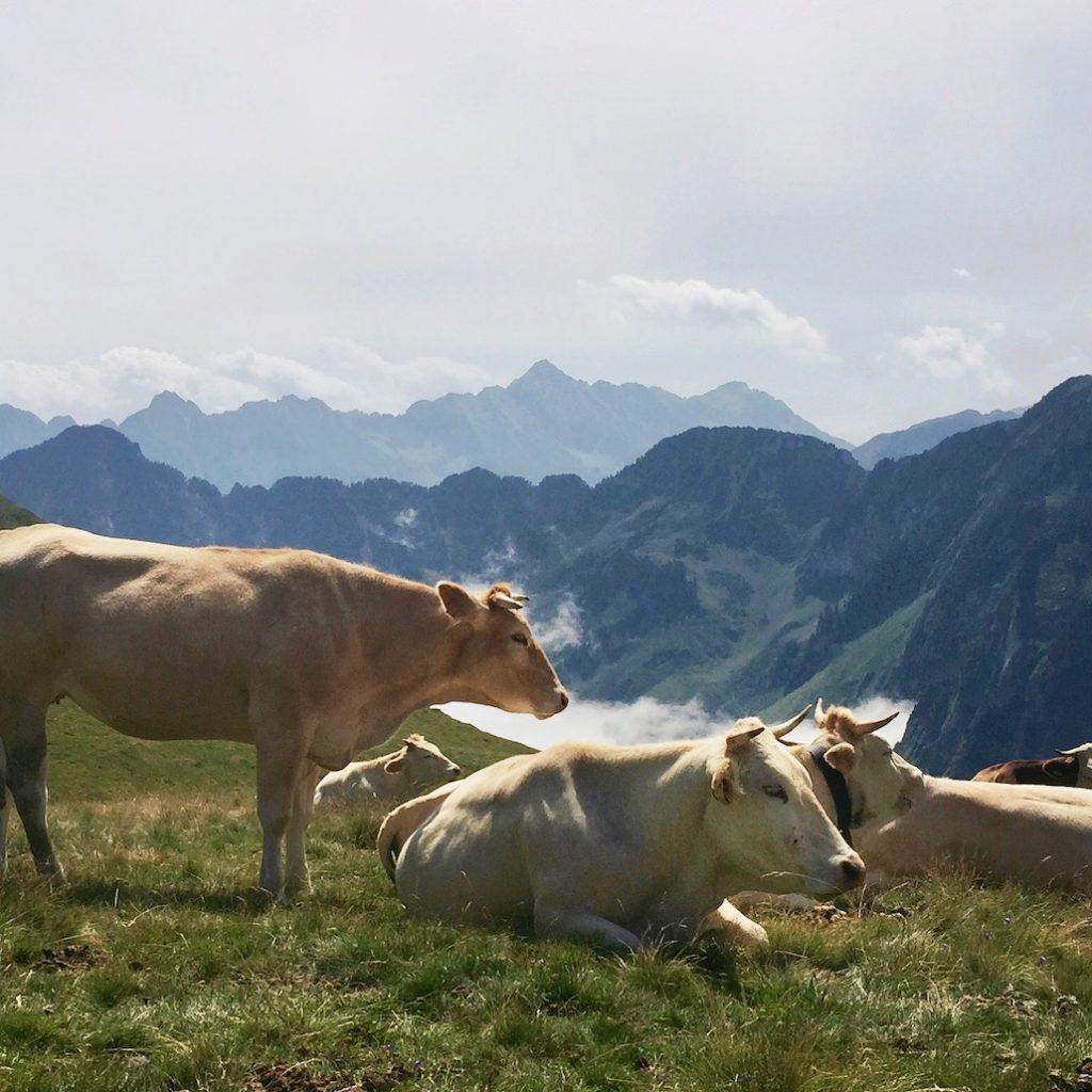 Diminuer sa consommation de viande – Explications & conseils