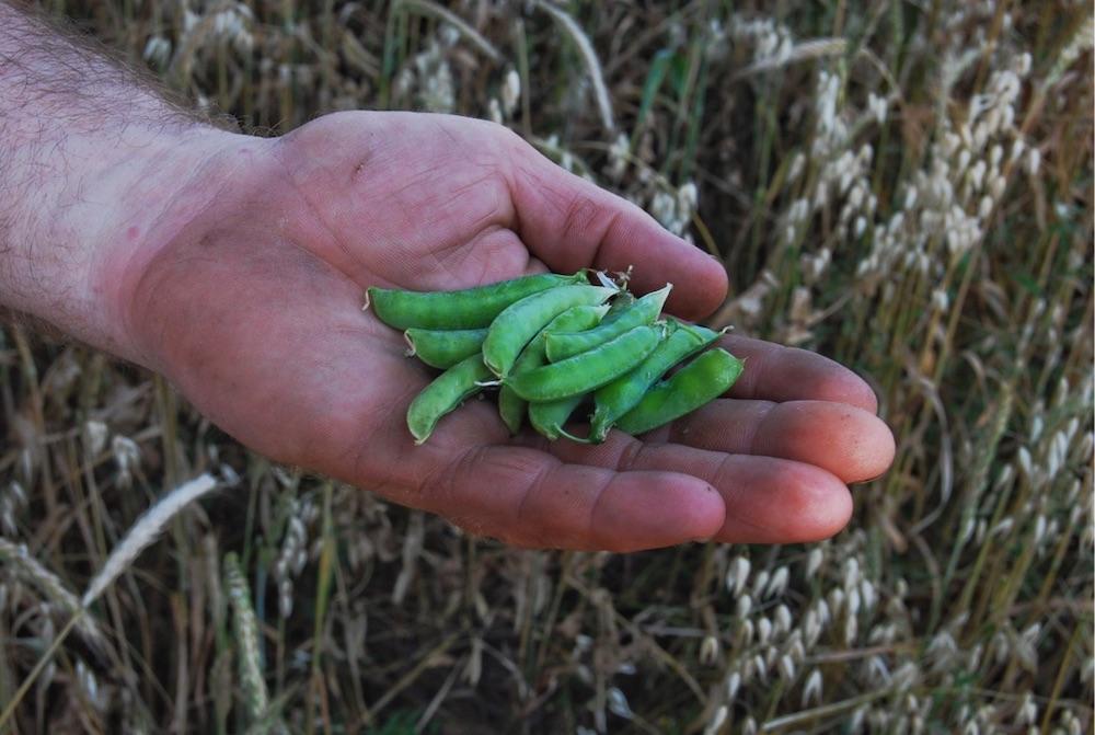 #JeFaisAuMieux🌱 : notre guide pour un mode de vie plus écologique