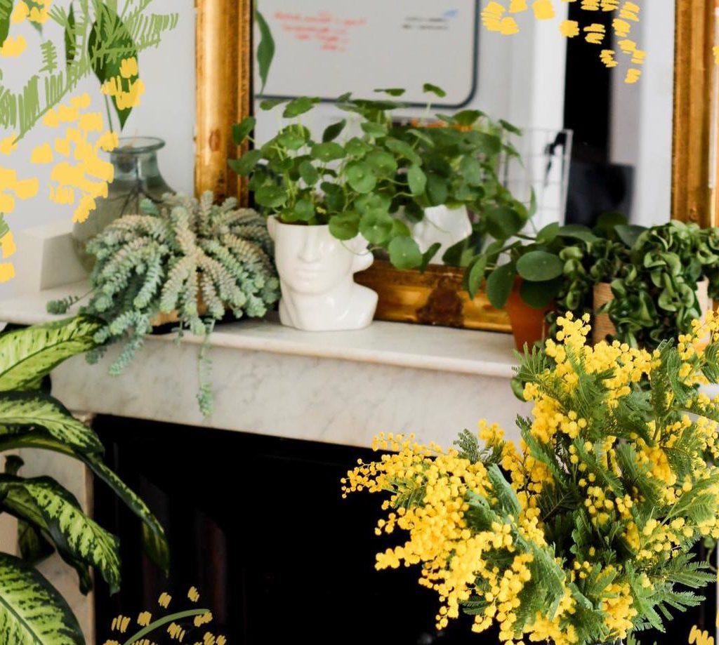 Conseils pour entretenir ses plantes et avoir (enfin !) la main verte
