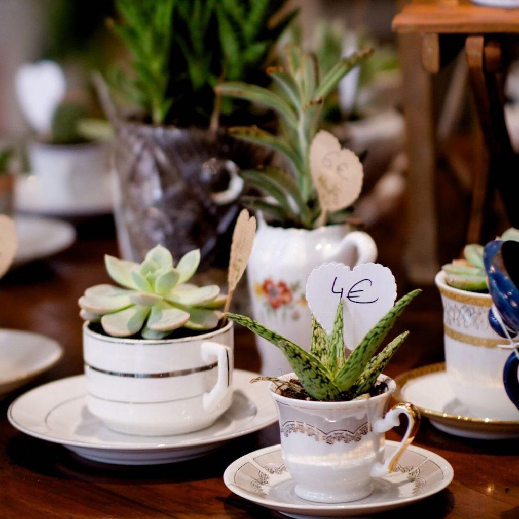 Les Succulentes de la Malice : plantes & vaisselle chinée
