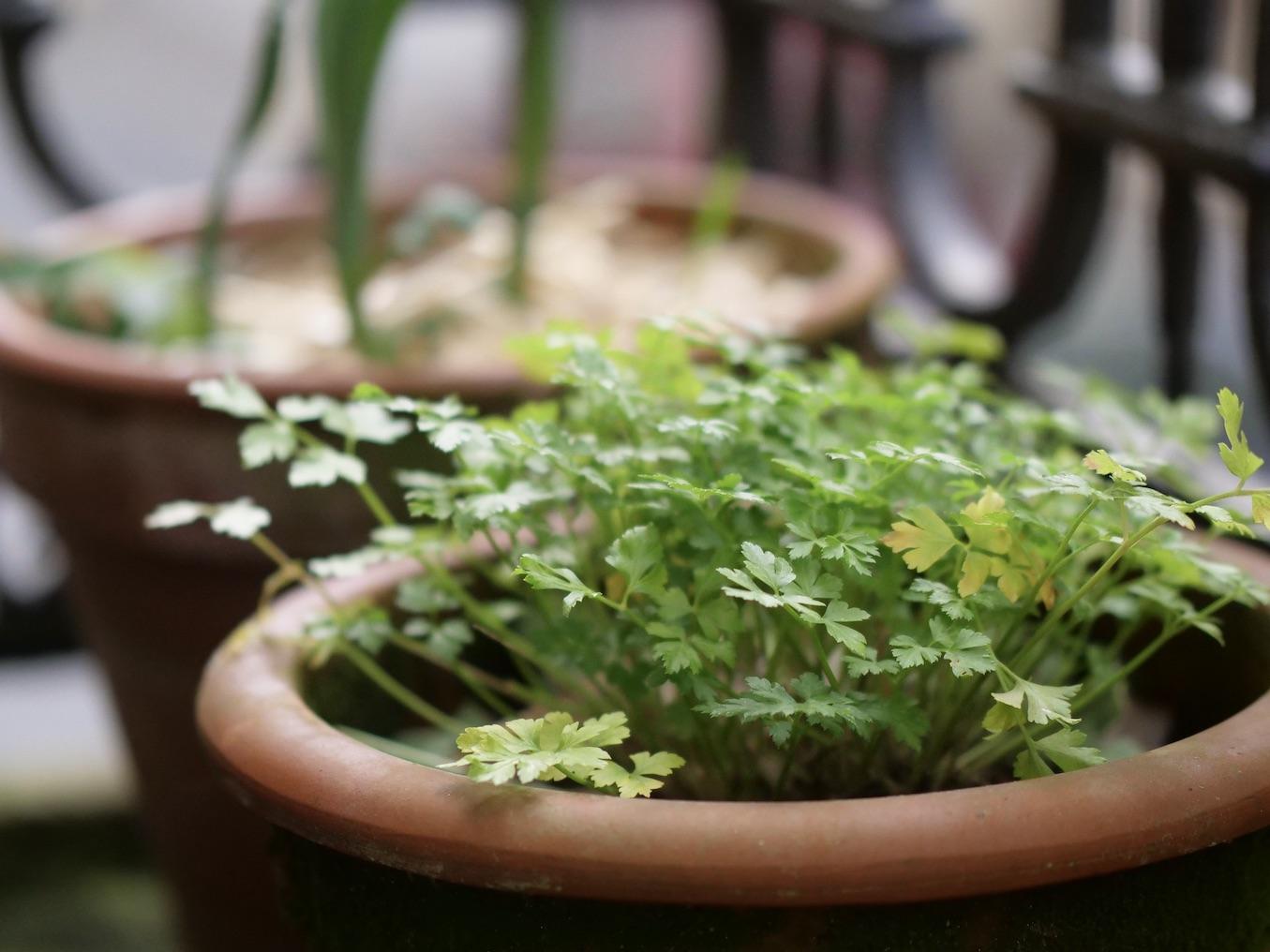 Un potager dans son appart #1 – Jardiner en ville, c'est possible !